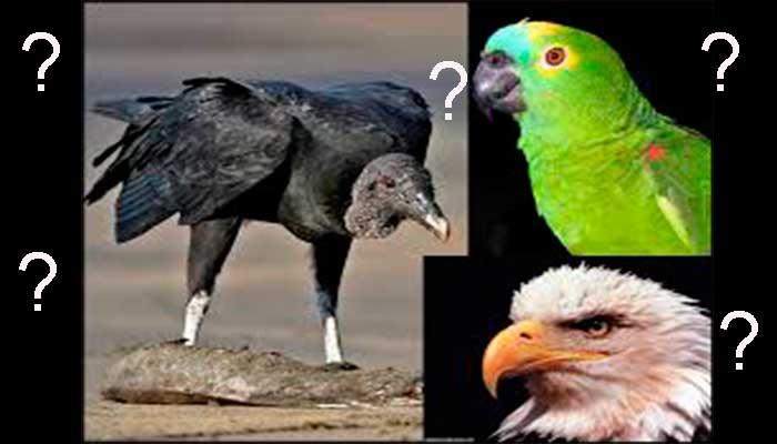 Qual Tipo De Profissional Você é Papagaio Urubu águia